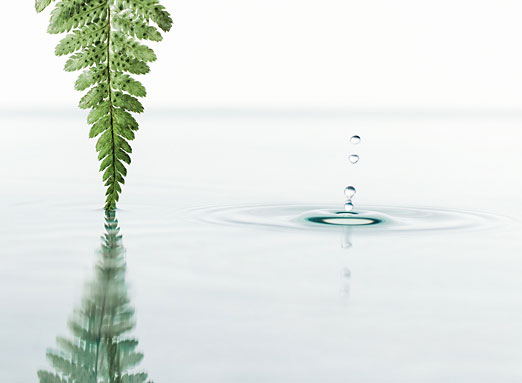 Fern and water droplet.